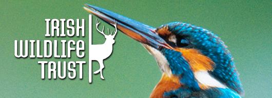 get_involved___irish_wildlife_trust