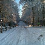 Road Through Drumboe Woods