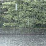 rainwet